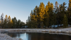 The sun rising over this creek in Yellowstone produces beautiful colors that dance across the tree tops.